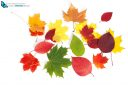 multicolored autumn leaves isolated on white background