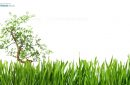 Tree in the middle of a green grass banner, cut out and isolated on white background for pattern