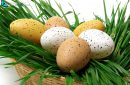 Easter eggs in a basket with green grass for the easter party