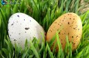 Two close-up Easter eggs hidden in green grass