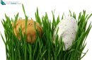 Easter eggs hidden in green grass, cut out and isolated on white background