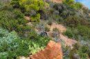 Provence, massif de l'Esterel