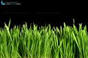 Greasy green grass cut out and isolated on black