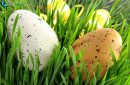 Easter eggs hidden in green grass for the French April holidays