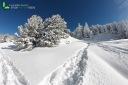 Trace de ski dans la neige